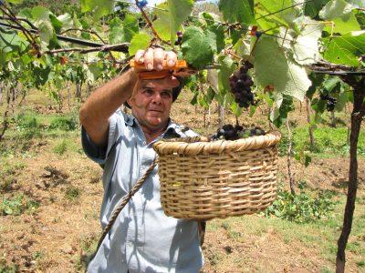 SENDA Rancagua entrega reconocimiento a empresa Agrícola de Rancagua
